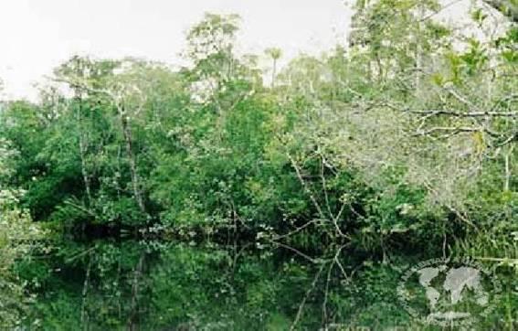 Tipos+De+Plantas+Rasteiras  litorânea é constituída por arbustos